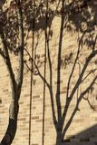 Shadow of tree on brick wall Royalty Free Stock Image