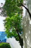 Shadow of tree on building wall Royalty Free Stock Image