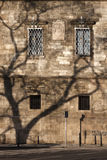 The shadow of the tree on the European brick wall Stock Photos