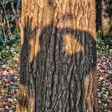 Shadow on tree Stock Images
