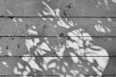 Shadow of tree on raw concrete wall with wooden formwork Royalty Free Stock Photography