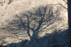 Shadow of a tree on the rock