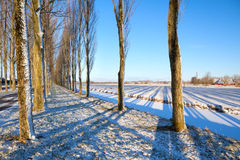 Shadow of tree rows on snow Royalty Free Stock Photo
