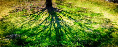 Shadow of tree in spring time Stock Image