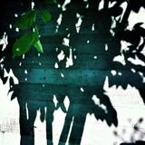 Shadow of a tree Stock Photography