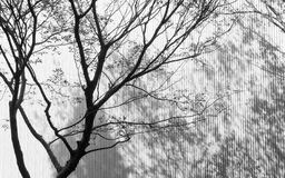 Shadow of tree Royalty Free Stock Photography