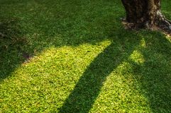 Shadow trees across the lawn. Royalty Free Stock Photos
