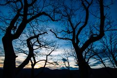 Trees and Sunset over the mountains in Asheville, NC stock image