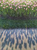 Shadow of tulips. Abstract shadow of pink tulip flowers on gray asphalt in spring day Stock Photos