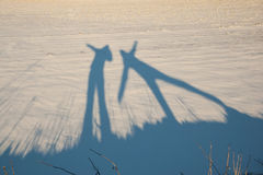 Shadow of two active people in snow Royalty Free Stock Photos