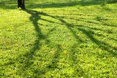 Shadow vs. Tree Royalty Free Stock Image