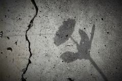 Shadow on a wall Stock Image