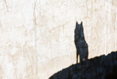 Shadow of the wolf. On the cracked wall Stock Photography