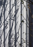 Shadow of young branches. Brushwood stock image