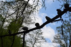 Shadowed birds o� a tree Royalty Free Stock Photography