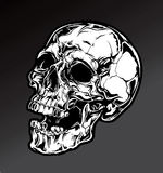 Detailed Skull. A Shadowed, detailed skull graphic Stock Images