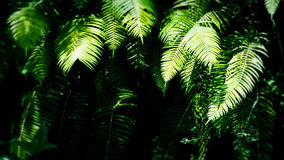 Free Shadowed Fern Leaves In Rainforest, Ubud, Bali, Indonesia Royalty Free Stock Photo - 88574115