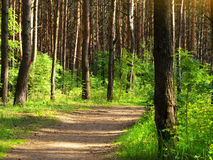 Shadowed forest Stock Images