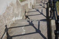 Shadowpatternfence Stockbild