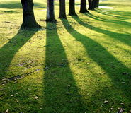 Shadows. Long shadows of trees taken in late afternoon Stock Photos