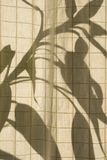 Shadows. Of a plant's leaves on Japanese style material Stock Images