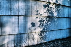 Shadows of another world. Garden shadows against the wall, with a whimsical creature that used to be a butterfly Stock Image
