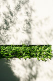 Shadows from the bamboo tree. Stock Images