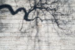 Shadows of the bent boughs on a wall Royalty Free Stock Photos