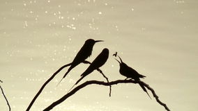 Shadows of birds. A silhouette of Bee-Eater birds on riverside Stock Photography