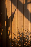 Shadows through the blinds Royalty Free Stock Image