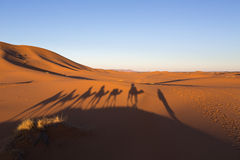 Shadows of camel caravan in desert Sahara Royalty Free Stock Photo