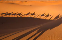 Shadows camel caravan on the desert sand Royalty Free Stock Images