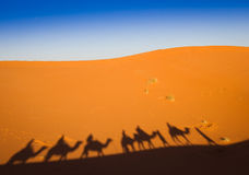Shadows camel caravan on the desert sand Royalty Free Stock Photos
