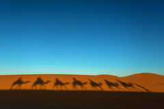 Shadows of camel caravan going through the desert at sunset. Royalty Free Stock Image