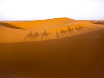 Shadows of camels in desert Royalty Free Stock Images
