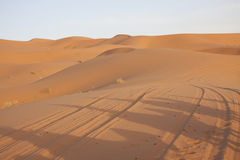Shadows of camels in the desert sand Stock Photo