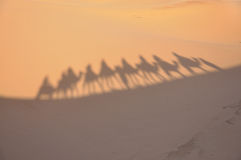 Shadows of camels in the Sahara Stock Photos