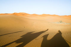 Shadows of camels in Sahara desert. Morocco Stock Photography