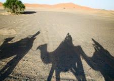 Shadows of camels in Sahara desert. Morocco Stock Photos