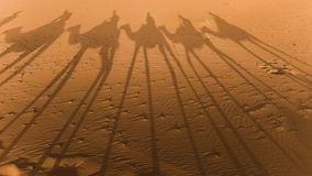 Shadows of camels in the sahara Stock Photography