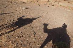 Shadows of camels Wadi Rum, Jordan Royalty Free Stock Photography