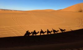 The shadows of the caravan on the hot sand of the sahara desert stock photography