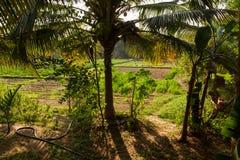 Shadows in a coconut grove. Stock Photos
