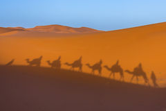 Shadows in the desert. Shadows in the sahara desert stock photo