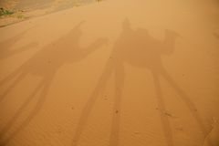 Shadows on the desert sand Stock Images