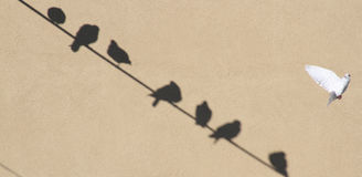 Shadows of doves. Shadows of some doves sitting on a wire Royalty Free Stock Photos