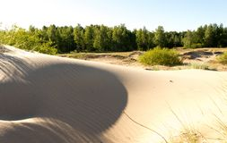 Shadows of dunes in summer morning Stock Image