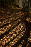 Shadows in fall forest Royalty Free Stock Image