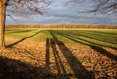 Shadows in the field Royalty Free Stock Photo