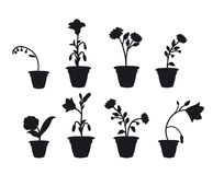 Shadows flower pots Royalty Free Stock Photography